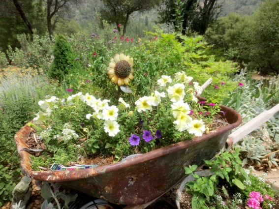 Flower Garden Ideas With Old Wheelbarrow real old wheelbarrows,in the garden | flea market gardening