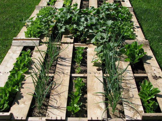 Catharine Robertson-Lepage's pallet salad garden