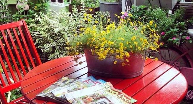 Anis's garden-featured