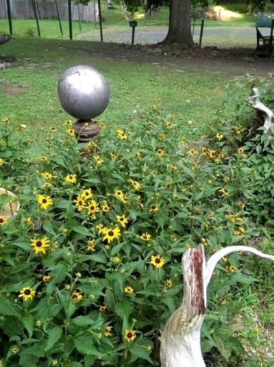Diane Garvey Black-eyed Susans are accented with an elegant silver 'gazing ball.'