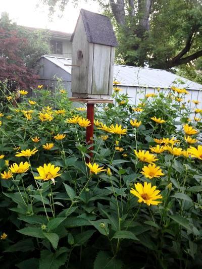 Linda Bota's birdhouse