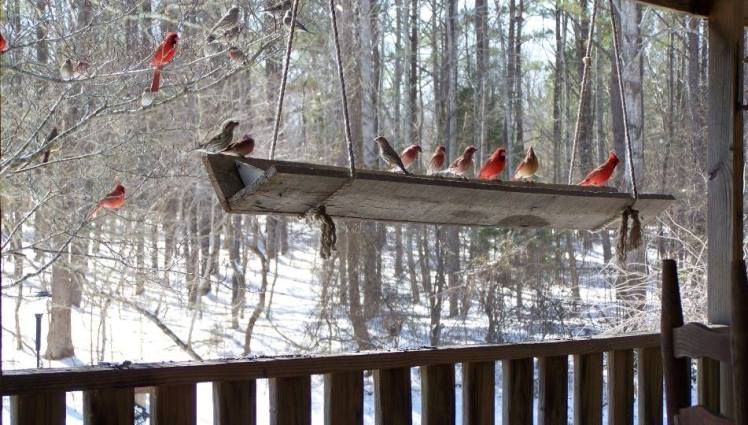 "Sue Jordan ""Trough feeder was busy today"""