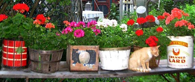 Bright geraniums stuck in all sorts of things from Just Enough Antiques