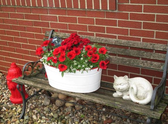 Jeannie Rhodes planted her enamelware with red