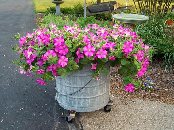 Arlene Brenneman's pink petunias compliment her galvanized tub