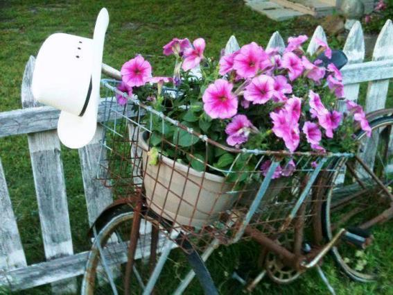Deborah Smith's petunias in her bike baket