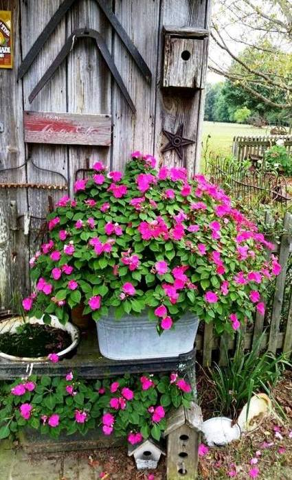 Darla Jenkins uses a single stunning flower