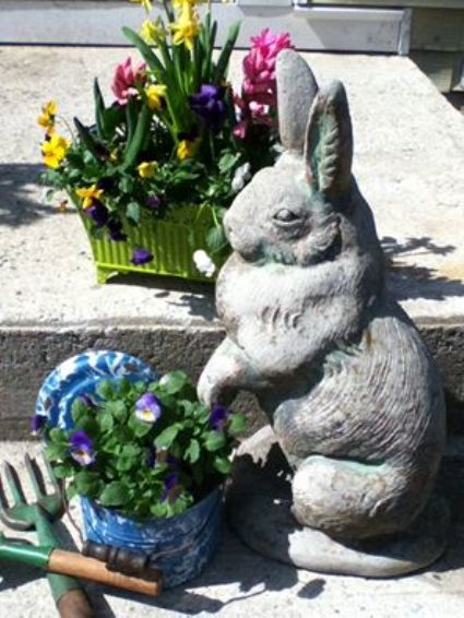 The bunny on my front steps...