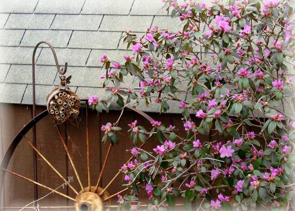 Jeanne's Mason bee house