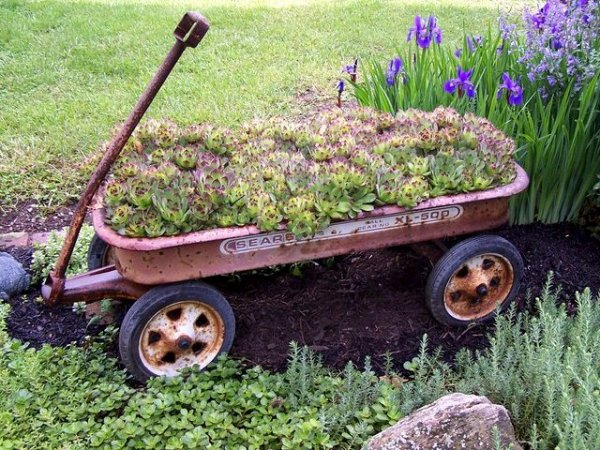 Myra Glandon wheels away her succulent garden in a wagon