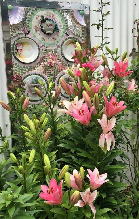 The lilies are blooming in front of the dish door in the garden