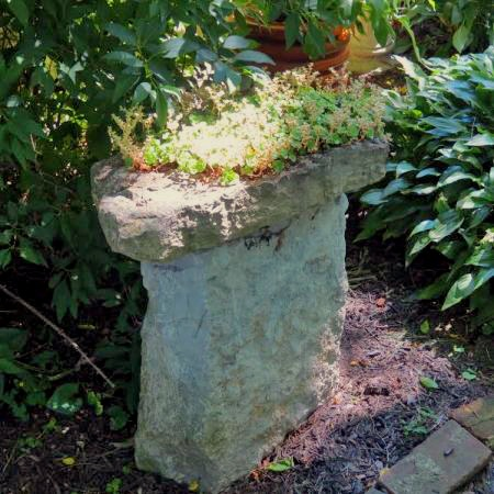Sedum put on a pedestal, as every gardener knows it deserves that spot!
