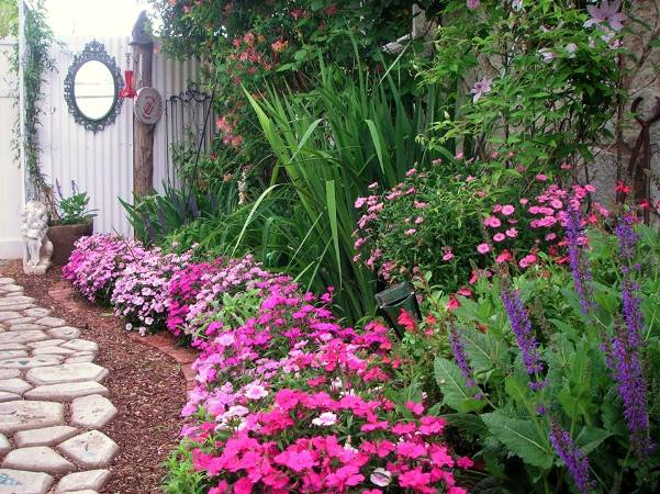Becky Norris's early spring border if dianthus