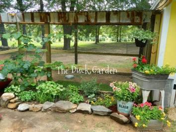 Dandi Gentry's chicken coop garden (2)