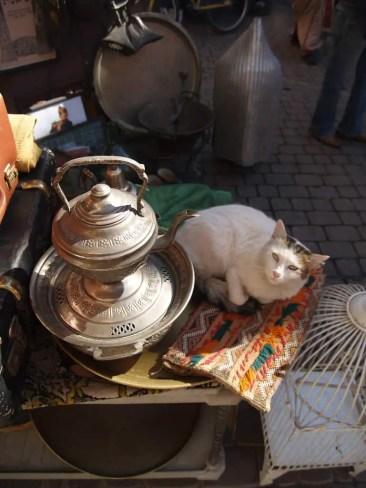 seier seier souq cat marrakech jan. 2007