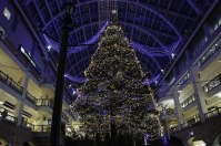 A Big X'mas Tree 2015 in Sapporo Factory