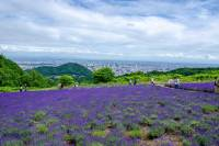 Horomitoge Lavender Garden and Night View Spot in Sapporo 2019