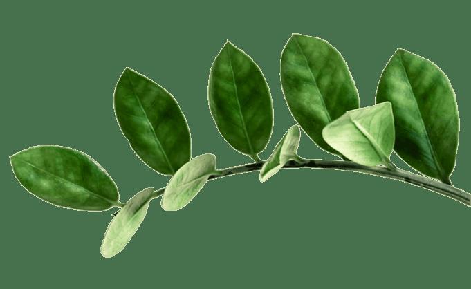 zz-plant-arm-2