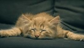 trött