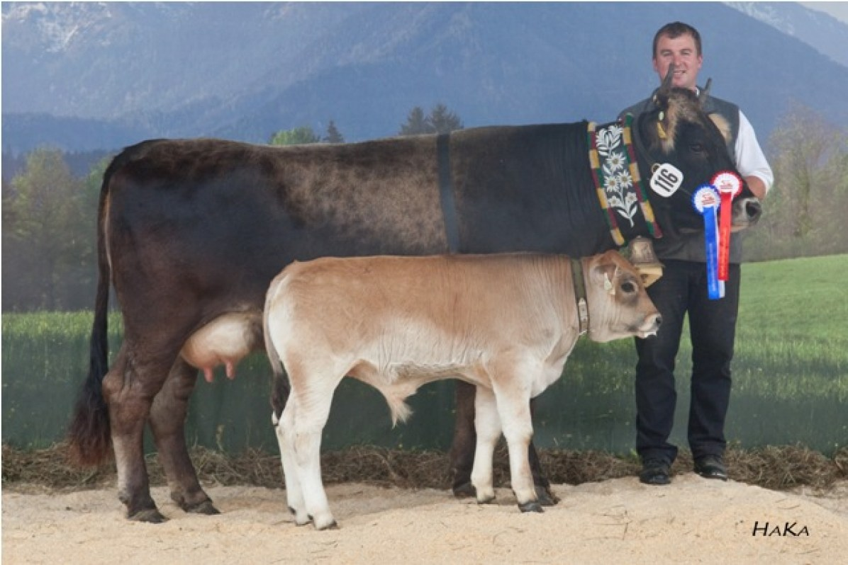 National Champion 2010: *SCHÖNE (V: DINOS AT) A: Roeck Guenther, 6473 Wenns, TG (© Stephan Hauser)