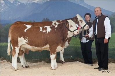 Reserve National Champion female 2010: EMSE P (S: HOLD DE), A: Wachholbinger Johannes, 4076 St. Marienkirchen, FIH (Foto: Stephan Hauser)