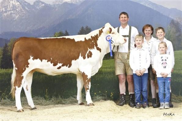 Reserve National Champion 2016 HERZOGIN (Ramses AT x Boris AT), dob: 29.09.2014, Family Mooslechner, Flachau, RSTM. Foto: Stephan Hauser