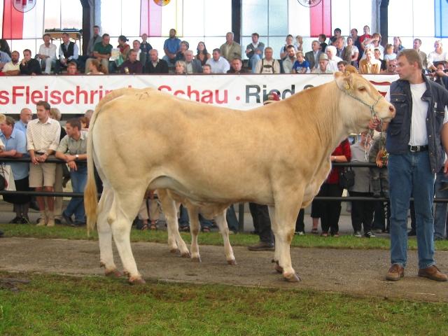 Erstplatziert in der Gruppe Blonde d'Aquitaine Kühe unter 2 Abkalbungen: Regina (V: Stani) von Fam. Teufl, Oberndorf
