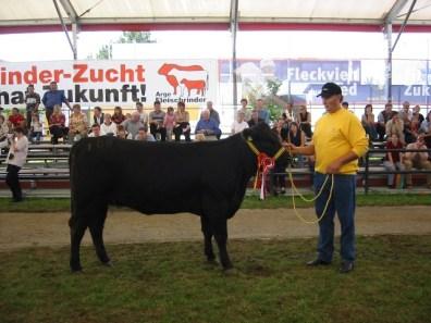 Bundessiegerin und Erstplatzierte in der Gruppe Angus Jungkalbinnen: Romi v. Tannhof von Familie Paulik, Thalheim