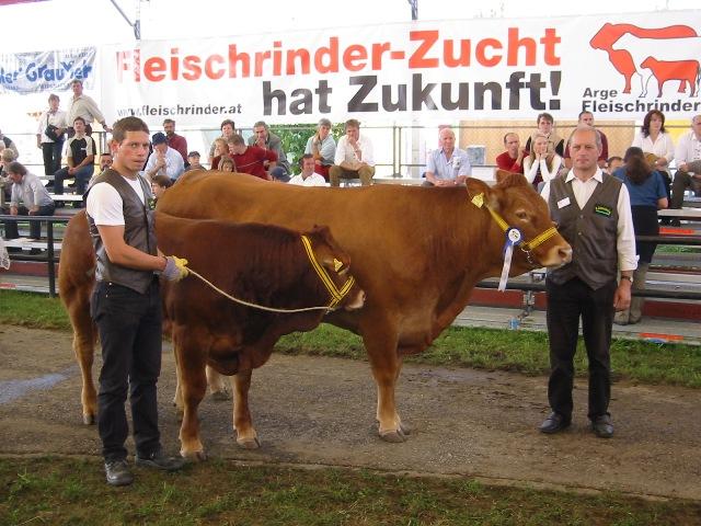 2. Platz Kühe