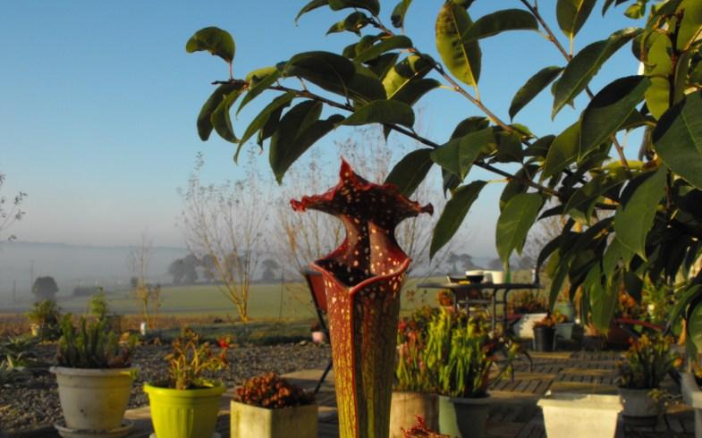 Embellir vos jardins !