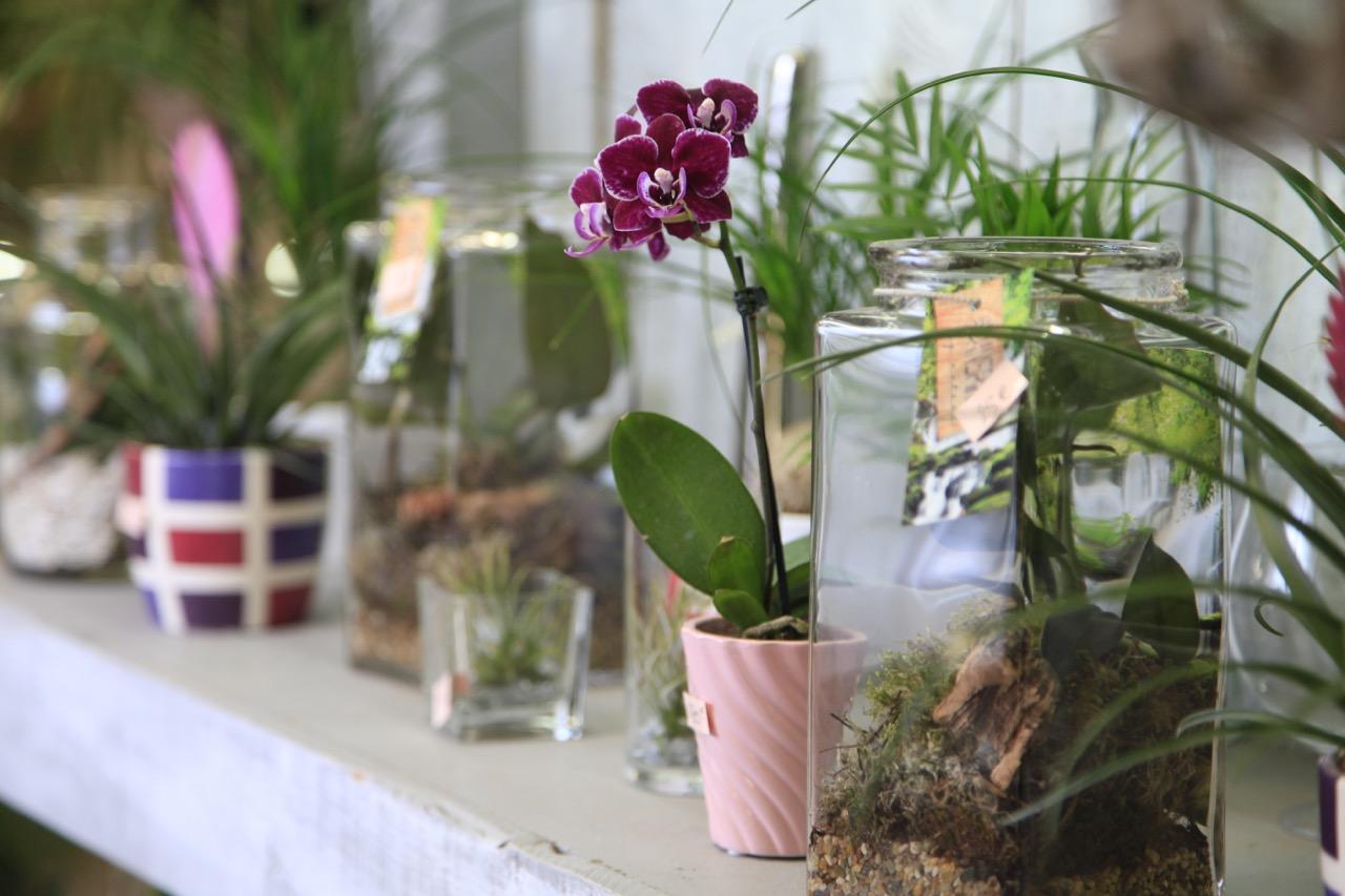 les fleurs du nil fleuriste toulouse