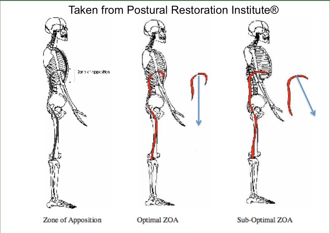 Pri Downward Facing Dog Yoga Modification