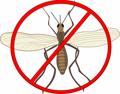 25 Ways To Get Rid Of Gnats Inside Outside The House