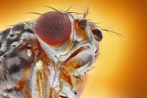 25+ Ways to Get Rid of Fruit Flies And Keep Them Away