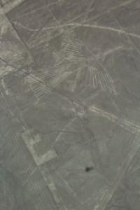 nazca figures condor