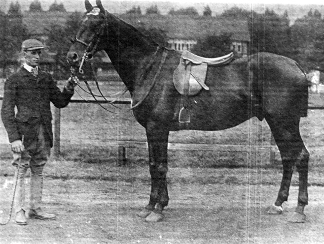 """The Sirdar."" 1st Prise 13-stone Hunter Class, Royal Dublin Society's Show in 1900. 134 Competitors - Property of Thomas Bate Esq., of Kelsterton, Flint."