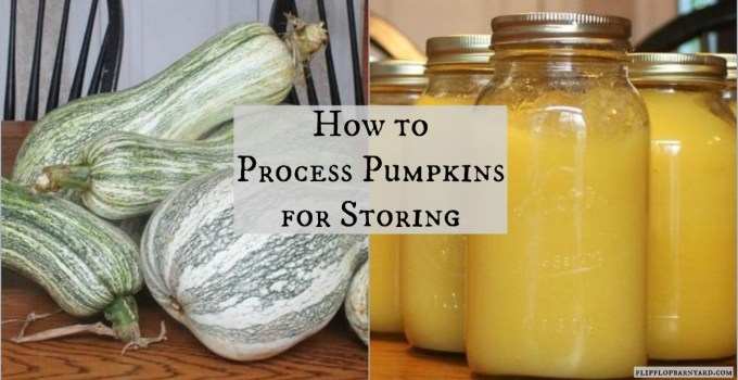 How to process pumpkins for storing.