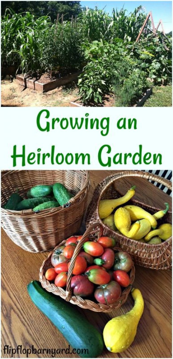 Growing and heirloom garden