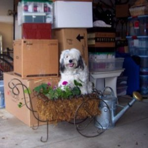 florida movers - packing up the dog