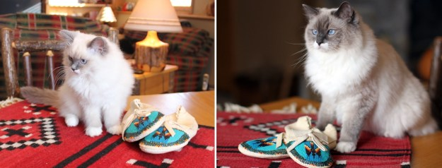 """Kelchi, my little moccasin girl. (Her name means """"moccasins"""" in the Navajo language.) Kelchi 11 weeks and 17 months"""