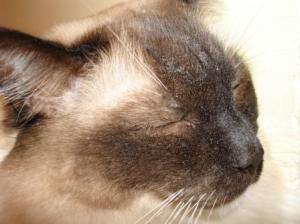 Caymus' Face Dusted With World's Best Cat Litter
