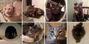 Kate's Modern Cats