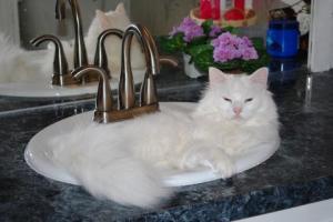 Harry in a sink