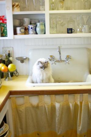 Hodge in butler's pantry owned by Evelyn Hefner