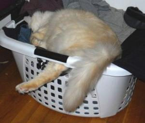 Dexter in a Laundry Basket