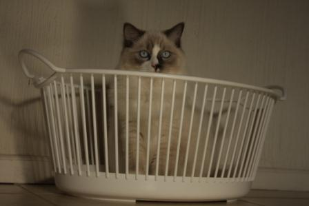 Theo in a Laundry Basket by Giuliana Stuber