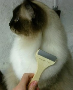 Ragdoll Cat with Rakom Cat Grooming Tool