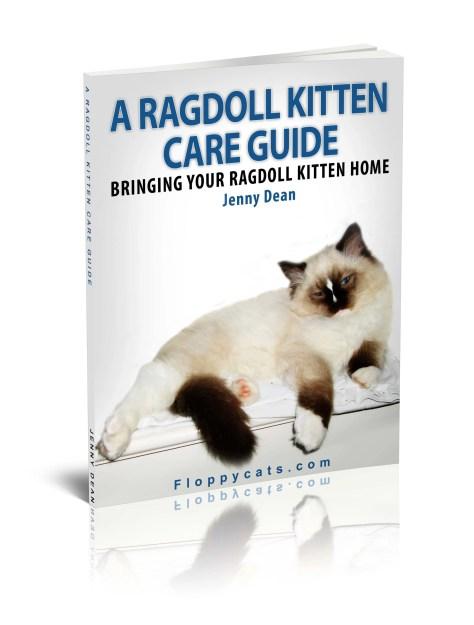 A Ragdoll Kitten Care Guide in Paperback