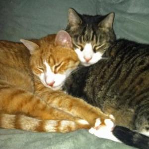 cat-couples-zero-calvin