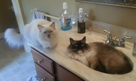 Nala and Simba (in the sink) loved by Rhuel Adams